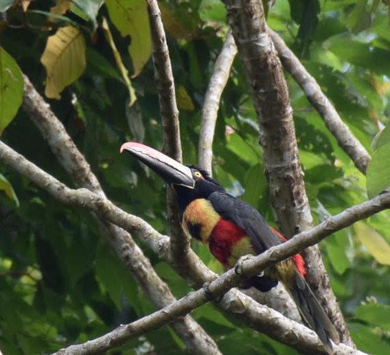 cusinga bird at casa cusinga