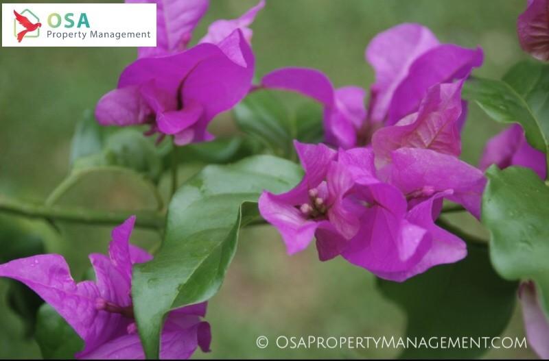parque reptilandia flowers