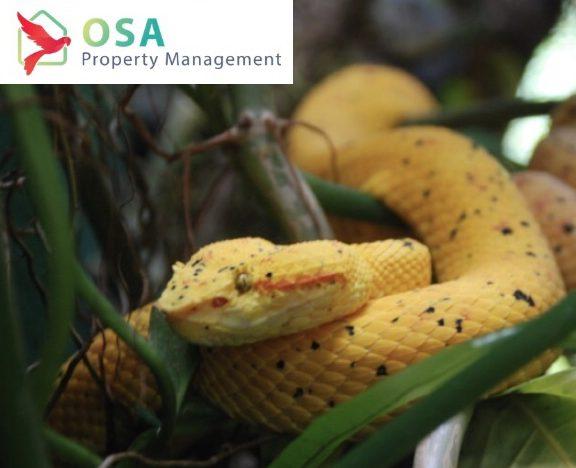 parque reptilandia yellow snake