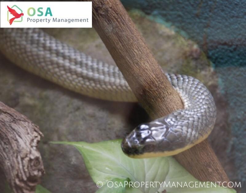 parque reptilandia brown snake