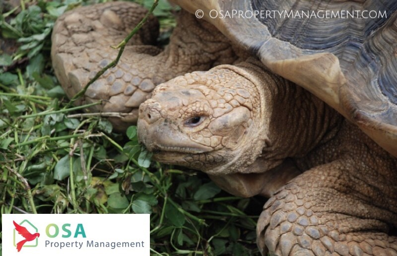 parque reptilandia turtle