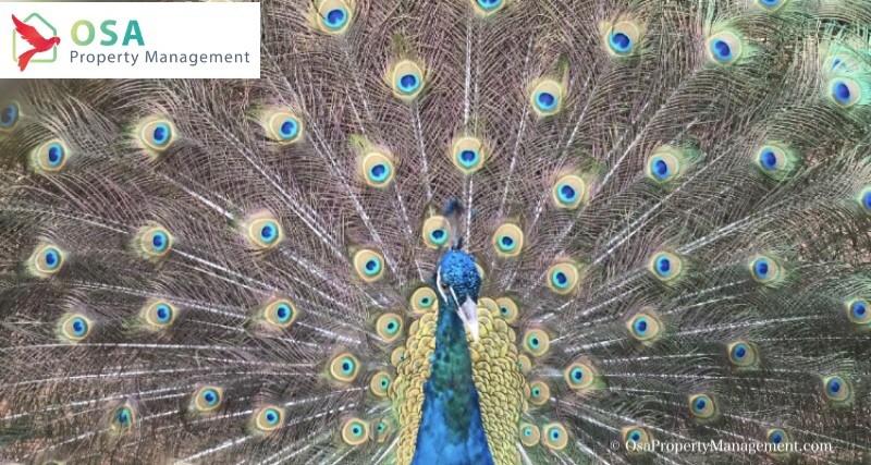 nauyaca waterfalls peacock